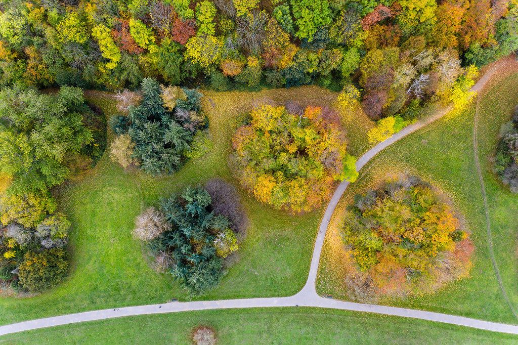 Aerial view of a german park during fall: red and orange foliage and colorful leaves on a green meadow