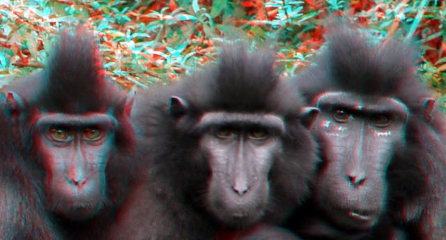 Photo:Blijdorp Zoo Rotterdam 3D By wim hoppenbrouwers