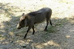 Memphis Zoo 18