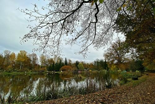 Autumn, wenn die Blätter fallen