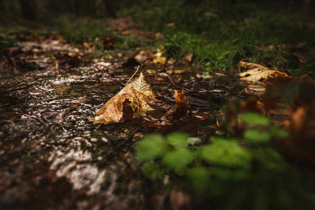 Leaf Closeup In Forest Stream