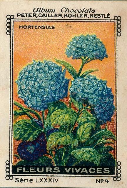 Photo:sluitzegelalbum chocolats pm 1920 pg 88 fleurs vivaces ill 4 By janwillemsen