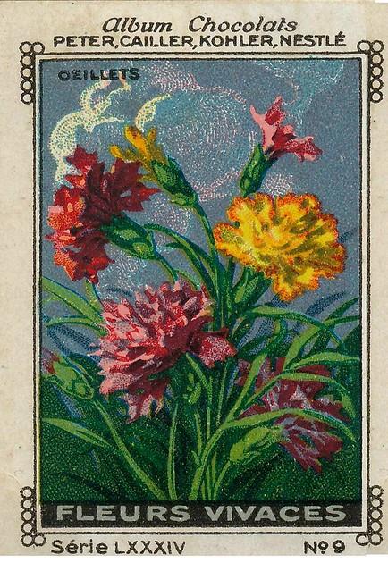 Photo:sluitzegelalbum chocolats pm 1920 pg 88 fleurs vivaces ill 9 By janwillemsen
