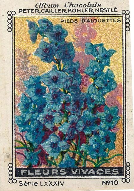 Photo:sluitzegelalbum chocolats pm 1920 pg 88 fleurs vivaces ill 10 By janwillemsen