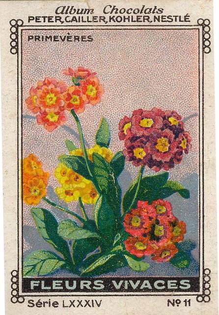 Photo:sluitzegelalbum chocolats pm 1920 pg 88 fleurs vivaces ill 11 By janwillemsen