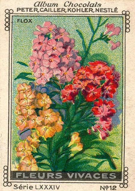 Photo:sluitzegelalbum chocolats pm 1920 pg 88 fleurs vivaces ill 12 By janwillemsen