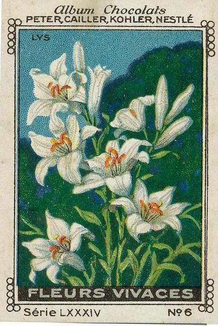 Photo:sluitzegelalbum chocolats pm 1920 pg 88 fleurs vivaces ill 6 By janwillemsen
