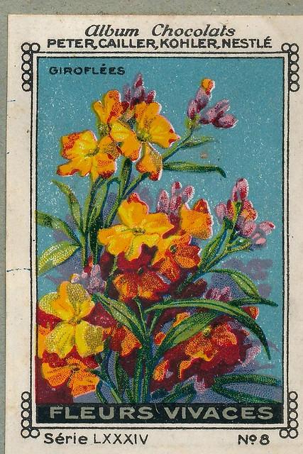 Photo:sluitzegelalbum chocolats pm 1920 pg 88 fleurs vivaces ill 8 By janwillemsen