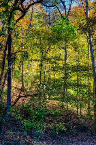 Fall Colors at Norris Dam