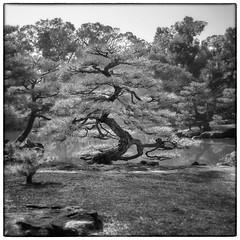 Trees / Arbres