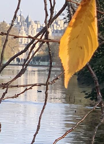 Lonesome leaf, St James's Park