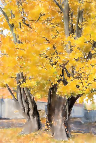 Autumn in Freiberg