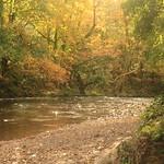 Autumnal Afon Llwyd