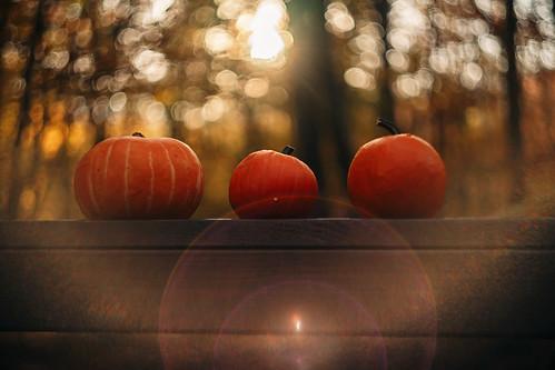 Rustic autumn// Otoño rústico
