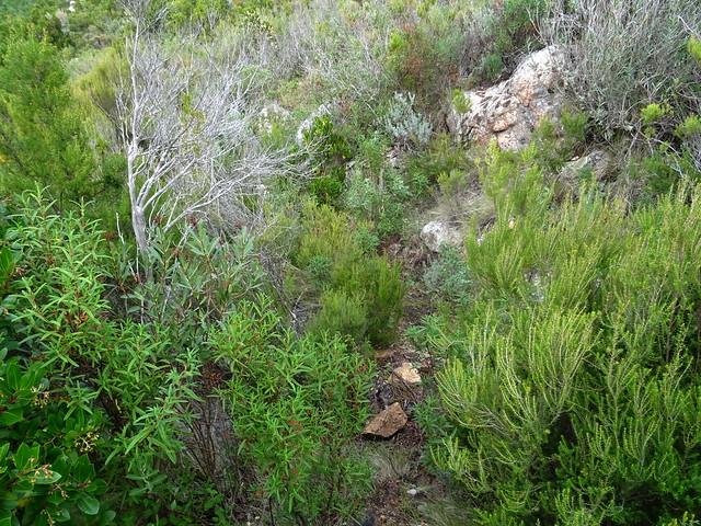 Photo:Corse2011070045 By Corse sauvage