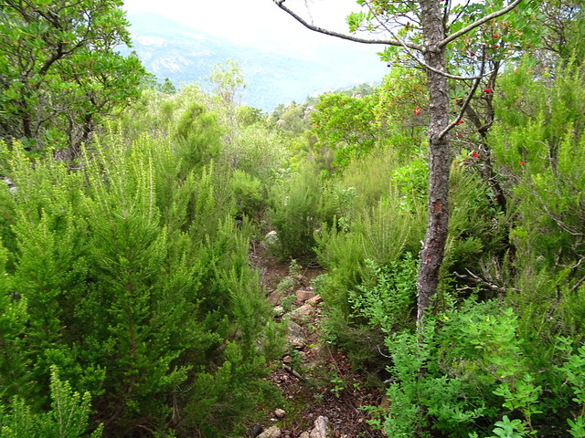 Photo:Corse2011070043 By Corse sauvage