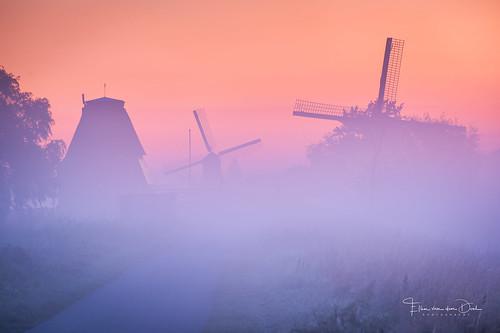 Windmill Dreams