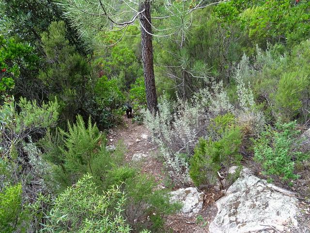 Photo:Corse2011070046 By Corse sauvage