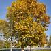 2020.11.08. Szegváron járt az ősz - Fotók:PURGEL ZOLTÁN©