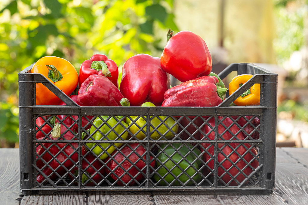 A box of fresh bell pepper on a blurred nature background. Harvest concept