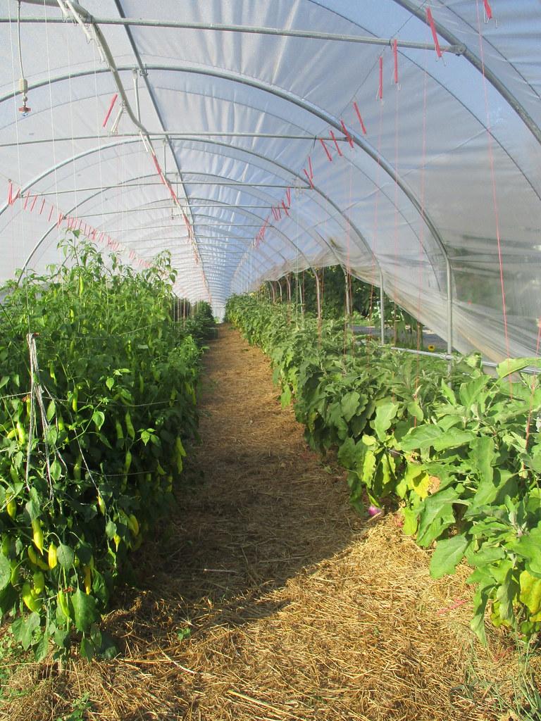 Besuch auf dem Bauernhof 2020