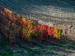 Vallée du Rhône,  les vignes en automne-13