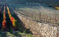 Vallée du Rhône,  les vignes en automne-12