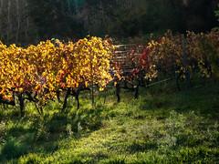 Vallée du Rhône,  les vignes en automne-10