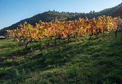 Vallée du Rhône,  les vignes en automne-8