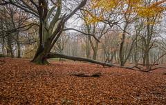Billinge Wood