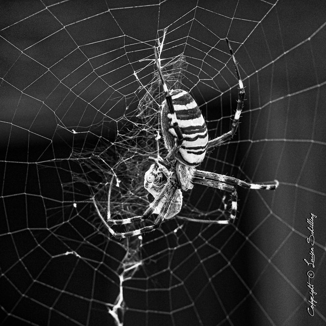 Browsing the web... (explored) #Sigma85mmArt #CanonPhotography
