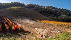 Vallée du Rhône,  les vignes en automne-11