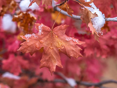 Zion National Park Autumn Colors Fall Foliage Snow Fuji GFX100 Fine Art Landscape Photography! Utah Autumn Snow! Elliot McGucken Master Medium Format Nature Photographer Fuji GFX 100 & Fujifilm Fujinon GF Lens!