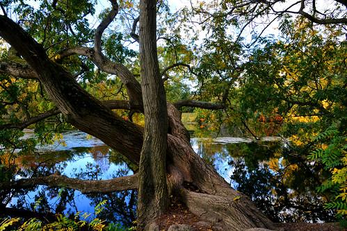 Tronc d'arbre Bois de Boulogne Paris_0966