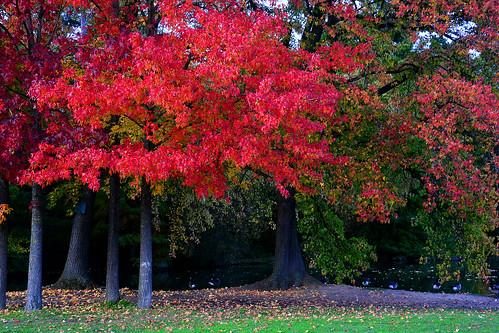 Bois de Boulogne Paris _1004