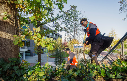 20201103 herfst [jan vonk]Amaliaplein onderhoud groen_IMG2019_da