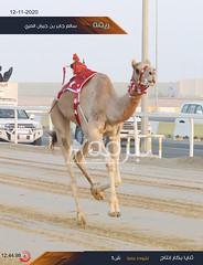 سباق الثنايا والحيل والزمول (إنتاج) والسودانيات بالمحلي الخامس 12-11-2020