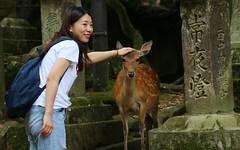 Japan - wildlife
