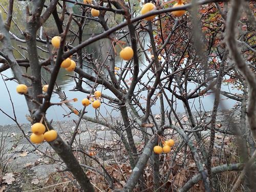 welche Früchte?