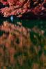 Photo:swan lake 伊奈ヶ湖 By tenugui