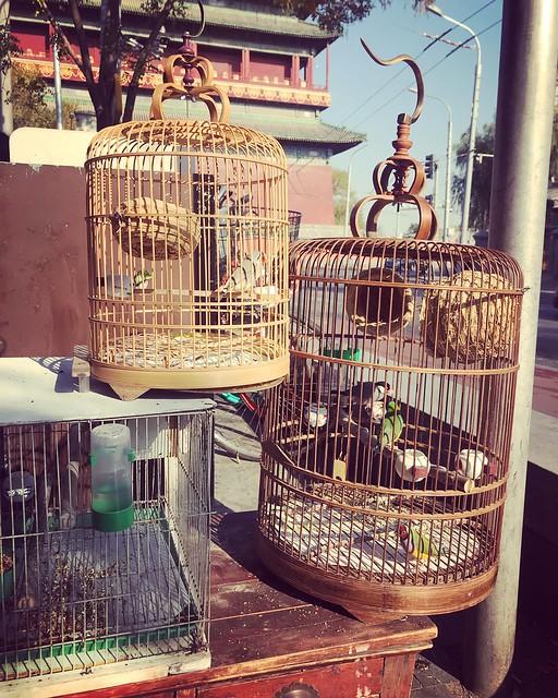 Birds of Beijing