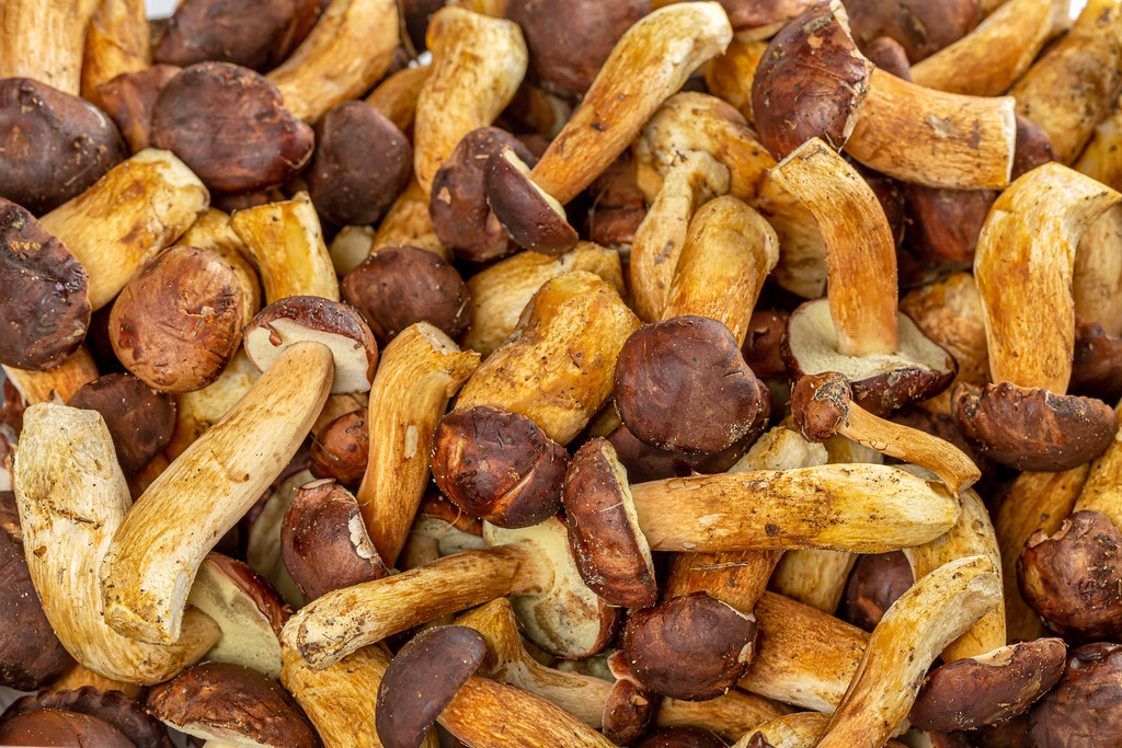 Freshly harvested boletus mushrooms background