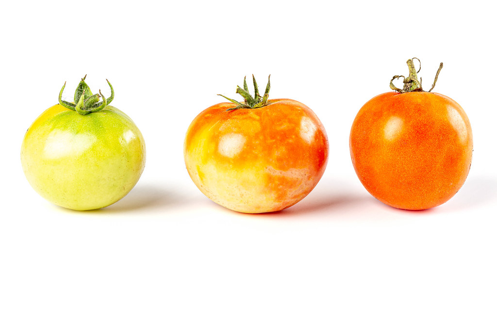 Three tomatoes of different colors