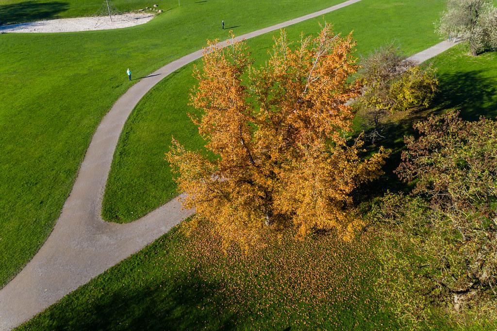 Spazierwege und Grünflächen im Forstbotanischen Garten und Friedenswald in Köln, Deutschland aus der Luft fotografiert