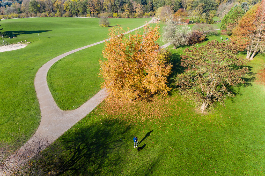 Drone Photo of Person with Dog on a Leash in Forest Botanical Garden And Friedenwald in Cologne, Germany