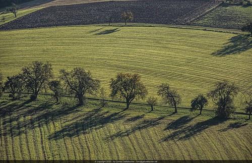 Fields & Trees - Light & Shadow / Balloon View