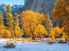 Sentinel Rock Yosemite Valley Autumn Snow! Yosemite National Park Autumn Colors Fall Foliage Snow Fuji GFX100 Fine Art Landscape Photography! California Fall Colors! Elliot McGucken Master Medium Format Landscape Nature Fuji GFX 100 & Fujinon GF Lens!