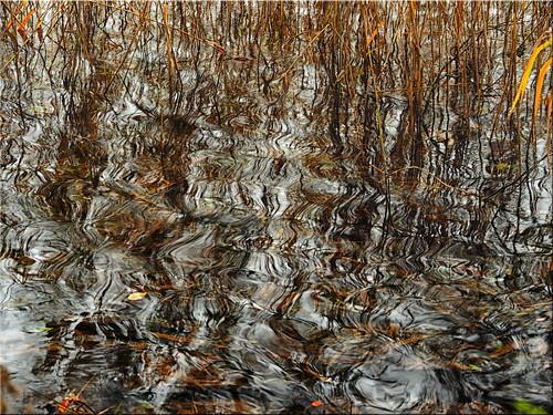 Autumn artwork on the lake