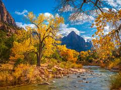 The Watchman: Zion National Park Autumn Colors Fall Foliage First Snow Fuji GFX100 Fine Art Landscape Photography! Utah Autumn Snow! Elliot McGucken Master Medium Format Nature Photographer Fuji GFX 100 &  FUJIFILM GF 32-64mm f/4 R LM WR Lens!