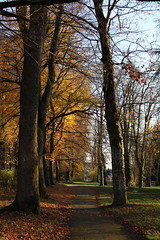 Chemin_d'automne_2